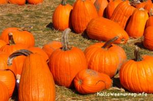 Halloween tök kiválasztása