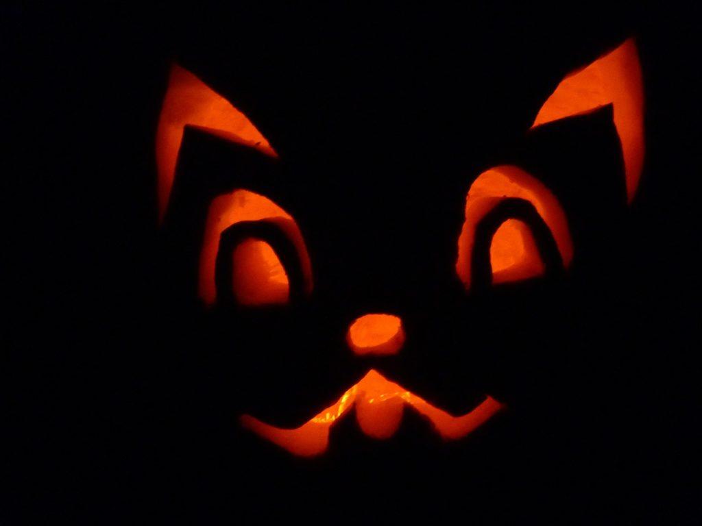 Halloween tök macska